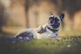 Hund liegt im Gras mit Blumen