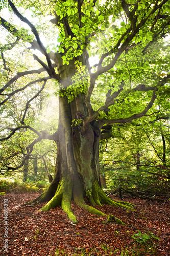 Fotobehang Betoverde Bos alter Baum