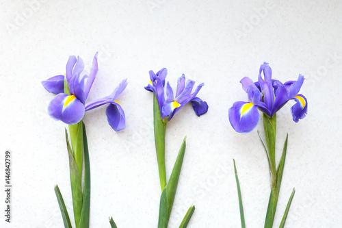 Aluminium Iris Three iris on a light background