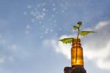 Natural remedies - medicines - 146873761