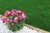 Modern front or back yard - 146894779