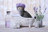 Fototapety Adorable Kitten in A Bathtub Relaxing