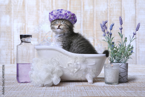 Adorable Kitten in A Bathtub Relaxing