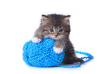 Kitten With Ball of Yarn in Studio