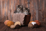 Kittens With Balls of Yarn in Studio