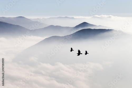 Silhouettes of mountains in the mist and bird flying - 147084949