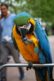 Parrots, macaws stand on a street