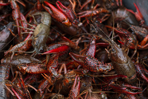 Live Crawfish Poster