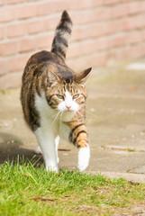 Eine laufende Katze