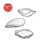 Vector sketch of the marine oyster