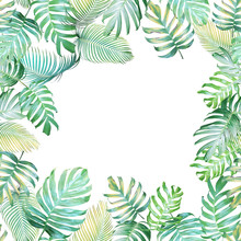 Tropical background with Monstera philodendron and palm leaves in light green-yellow color tone, tropical leaves frame on white background.