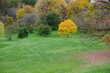Yellow tree in the Arboretum park in Ottawa, Canada