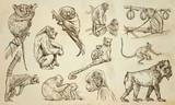 MONKEYS - An hand drawn vector pack, line art - 147273518