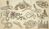 SNAKES - An hand drawn vector pack, line art - 147274188