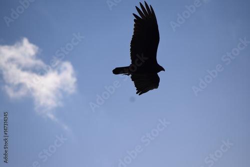 Poster Hawk