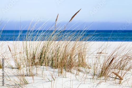 Strand mit Dünengras in Prerow, Darß, Fischland, Mecklenburg-Vorpommern - 147496945