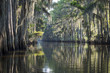 Still misty morning view of the scenic waters of Caddo Lake, the Texas - Louisiana swamp