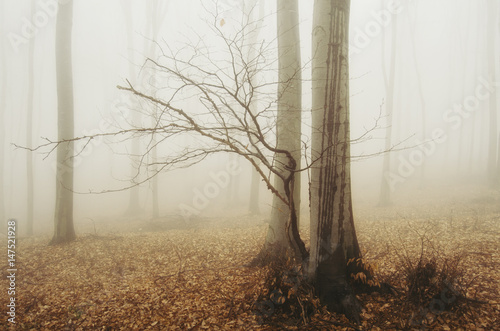 minimal woods scenery with trees in mist - 147521928