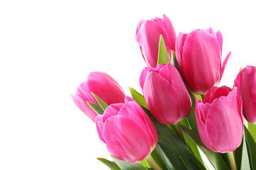 Bouquet of pink tulips on a white background