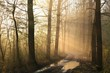 Early spring forest on a foggy morning
