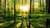 Fototapety Sonnenuntergang im Wald