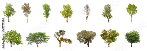 collections green tree isolated. green tree  isolated on white background. - 147777380