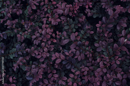 Real tropical leaves background, jungle foliage - 147799765