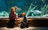 little boy and girl watching fishes in aquarium - 147940994