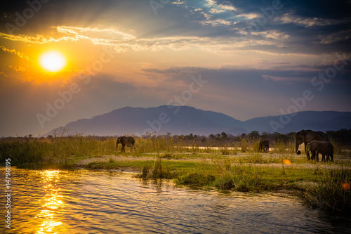 Elephants in Lower Zambezi National Park - Zambia
