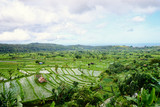 Beautiful landscape with green rise fields view. Bali, Indonesia.