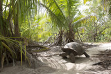 Giant tortoise in jungle