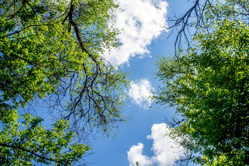 Green tree crowns against the sky