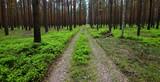 Leśna droga pozostała po wycince lasu