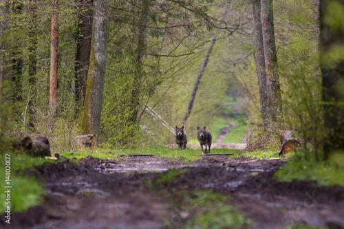 In de dag Weg in bos Wilki