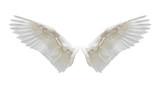 Internal white wing plumage