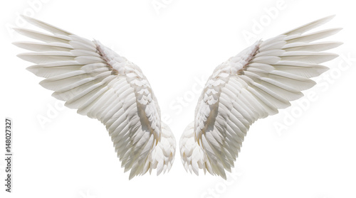 Natural white wing plumage - 148027327