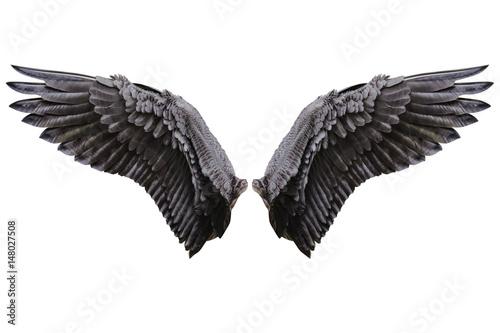 Angel wings, Natural black wing plumage - 148027508