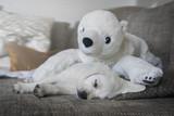Müder Labrador Welpe liegt auf dem Sofa mit seinem weißen Eisbär Kuscheltier