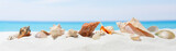 Banner summer background with white sand. Seashell on the beach. - 148073935