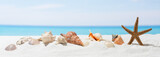Fototapety Banner summer background with white sand. Seashell and starfish on the beach.