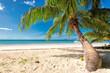 Palm trees on white sand on a tropical beach.