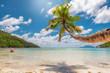 Palm tree on tropical beach. Fashion travel and tropical beach concept.