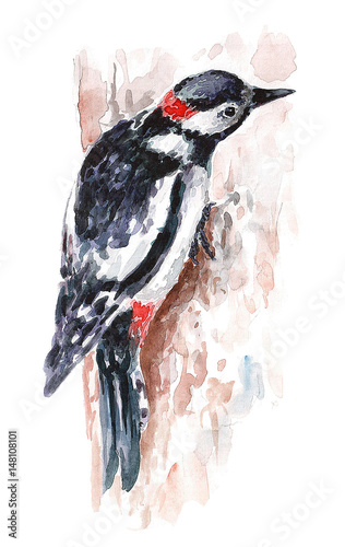 Watercolor woodpecker - 148108101
