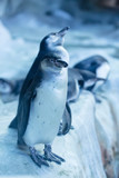 Group of pinguins in Russia, Moscow Zoo
