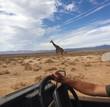 safari in Africa - 148152903