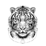 tiger head full face symmetrical, sketch vector graphics black and white drawing