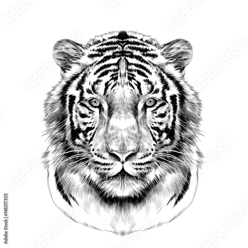 Fototapeta tiger head full face symmetrical, sketch vector graphics black and white drawing