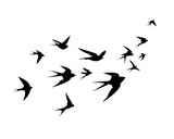 A flock of swallow birds go up - 148317564