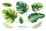 Hand drawn watercolor tropical plants set. Exotic palm leaves, j - 148324928