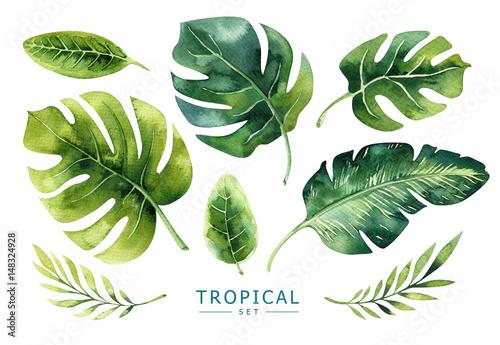 Ręcznie rysowane zestaw akwarela tropikalnych roślin. Egzotyczne liście palmowe, j